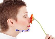 Вакуумный массаж челюсти - массажные линии.